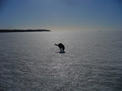 Dolphin with a tail? (Kettukusu) Tags: sea dog pet ice landscape outside helsinki scenery view dolphin scene balticsea vista maisema sundaywalk lauttasaari näkymä canyouseeit