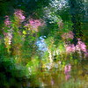 Giverny spirit III! / Âme de Giverny III! (Denis Collette...!!!) Tags: flowers cinema canada reflection tree fleurs river garden painting bravo invisible jardin rivière peinture explore reflet québec monet soul bec arbre giverny cinéma 500x500 âme blueribbonwinner firstquality supershot magicdonkey fivestarsgallery mywinners abigfave artlibre anawesomeshot flickrbest ultimateshot ultimateshots visiongroup deniscollette superbmasterpiece diamondclassphotographer flickrdiamond asclépiades bestofr theunforgettablepictures world100f photoexel ithinkitstheart vision100 goldenvisions magicunicornverybest