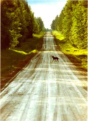 Zappo on the road (Per Ola Wiberg ~ Powi) Tags: road summer pets dogs nature beautiful wow wonderful geotagged ilovenature sweden 1993 excellent abc sverige 90s jmtland sommar vg naturescenes hundar zappo roadcam northof60 minolta7000 natureworld mostintresting bomsund stugun flickrspecial impressedbeauty flickraward flickrbronzeaward nittiotalet flckrhearts exemplaryshotsflickrsbest natureislife flickridol flickrgoal fotosconestilo naturestreasures brilliantphotography wowawards addictedtonature youandtheworld zodiacawards mygearandme simplyyourbestphoto hellofriend