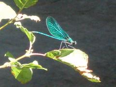 libellula - by sp!ros
