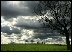 (andrewlee1967) Tags: cheshire tree field clouds andrewlee1967 uk searchthebest andylee1967 canon400d england landscape focusman5 andrewlee
