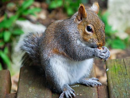 032007 Squirrel 2