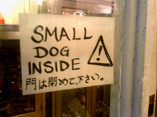 Warning small dog