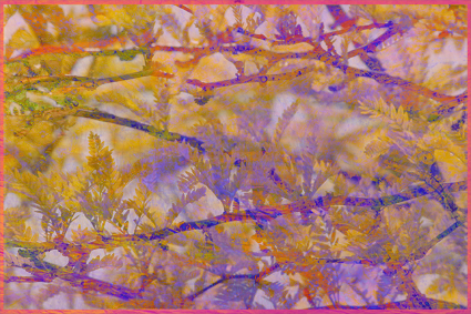 spring_ripple2