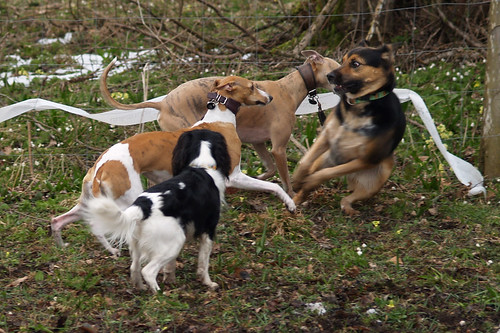 Hundeschule Ebbs