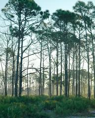 Sunrise in Estro State Park, West Coast ,Fl. (burt1barnett) Tags: nature landscape aclass beautifulcapture amazingshots flickrelite eyeforcomposition flickrheaven flickrextraordinarycaptureaward