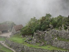 Jungle Trail to Machu Pichu 148 (regiroo2) Tags: machu pichu trail jungle