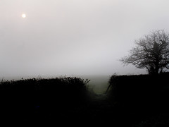 Sun in haze over field (net_efekt) Tags: morning trees sun cold tree misty fog walking grey countryside haze nebel walk country foggy feld felder grau willow fields kalt bume chill baum willows filed damp khl