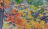 _DSC4529 (purin_cess) Tags: centralpark 2016 autumn 11月 十一月 秋 中央公園 紐約 ny newyork