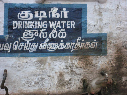 Monkeys need to water too..