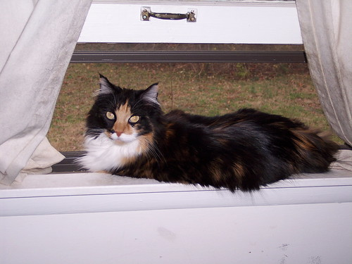 Callie in an open window