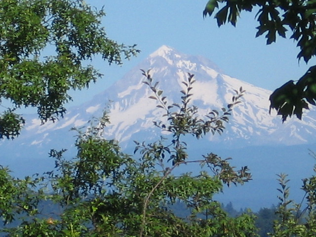 Mt. Hood from Kelly Butte