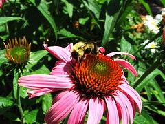 flowerbee10