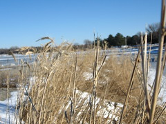 Waiting for burial (Bird Socks) Tags: winter grass foreground