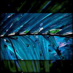 Wild Night (Yorick...) Tags: blue photoshop square fun intense palm yorick artlibre colorphotoaward