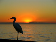 .. winter sunset  and a bird ... (katifelkai) Tags: ocean california winter sunset bird ilovenature bravo pacific dusk newportbeach whatilove flickrwow egret interestingness79 i500 abigfave impressedbeauty