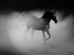 [ Breakthrough ] (Rashed Al Ben Ali) Tags: horse black love nature fog ilovenature bravo sony dream running dreamy f717 blueribbonwinner supershot magicdonkey searchthebes flickrsbest i fivestarsgallery accepted100coolest superaplus aplusphoto irresistiblebeauty superbmasterpiece diamondclassphotographer blackribbonbeauty