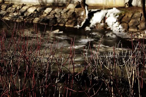 Wintery sticks