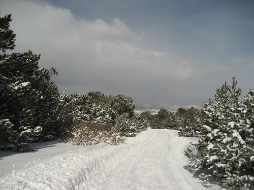 Edgewood, NM