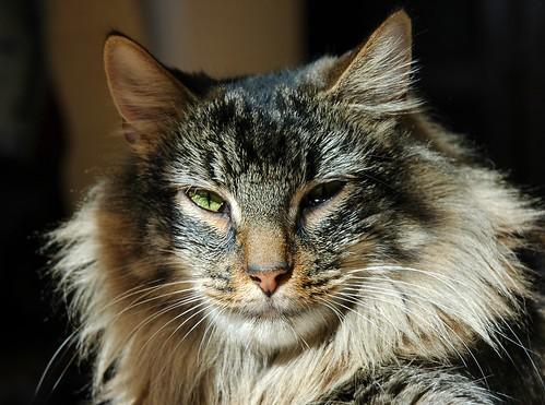 Cat Mandu by eva101.