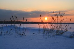(Fredww) Tags: winter sunset sea sun snow ice reed finland helsinki