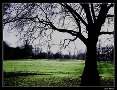 Silhouettd (Hari_Menon) Tags: park england tree grass silhouette photoshop geotagged flora europe branch searchthebest unitedkingdom lawn meadow ground pasture westpark westmidlands wolves wolverhampton