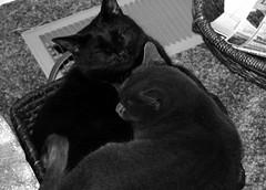 Jester & Douina