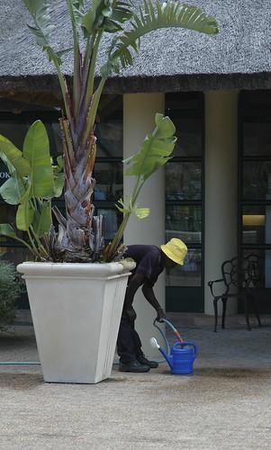 watering II