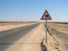 Camel Crossing (skylarprimm) Tags: africa desktop tunisia desktopphoto