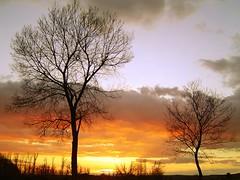 Dos rboles / Two trees (Asturtom) Tags: madrid trees sunset espaa tree arbol atardecer spain arboles arbres puestadesol espagne arbre spanien spagna anochecer aranjuez naturesfinest abigfave ltytr2 ltytr1 ltytr3 ltytr4 ltytr5 treesubject a3b