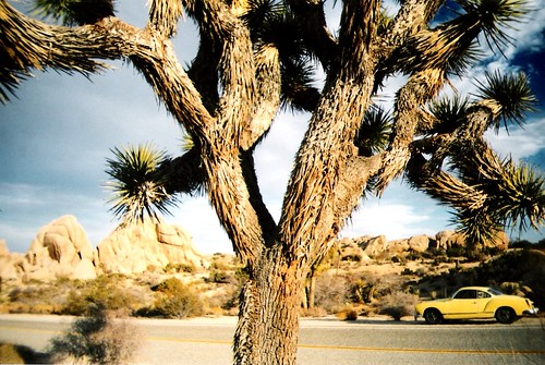 Joshua Tree National Park- Ghia