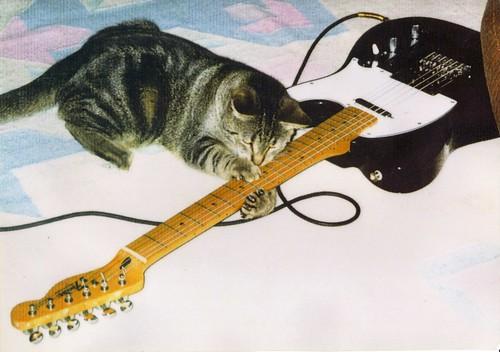 'Cat Scratch Fever' - Ottawa 2002