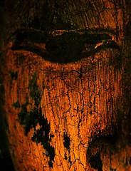 eye of buddha - by Barabeke