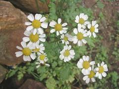Flores - Posada El Encanto