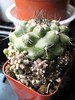 99¢ Cactus