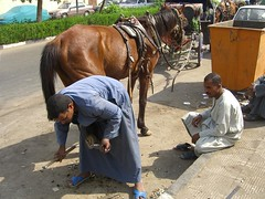 Shoeing a horse in Luxor