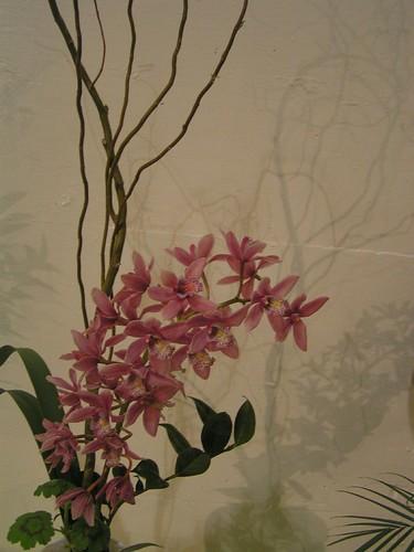 orchids19