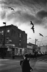 from the air II (krameroneill) Tags: leica film topf25 birds brooklyn m2 ilforddelta voigtlanderskopar3525 krameroneillcom
