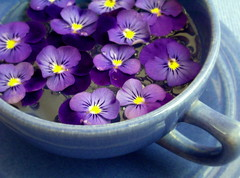 cuppa heaven (Az~Kate) Tags: flowers blue purple pansy lavender explore violets blooms teacup californiapottery impressedbeauty favemegroup3