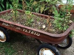 wagon with cilantro