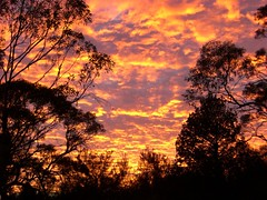 Sunrise (Pat Scullion) Tags: sunrise bush australia outback igawarta headingbush