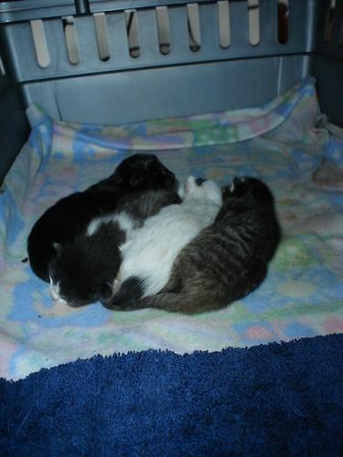 4 gatitos
