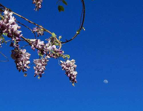 waxing moon in spring