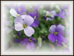 Flor (Bluebird0927 (ON/OFF)) Tags: flowers ilovenature finest eyeofthebeholder blueribbonwinner goldenphotographer citrit