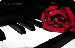 I want 2 spend my life time ,, loving you  (L) (. hanim `) Tags: life red rose loving time you piano want to spend my i ghanim