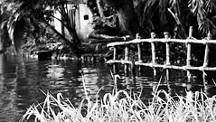 (SamDRajkumar) Tags: samdrajkumar blackandwhite blackwhite water backwaters kerala keralabackwaters godsowncountry coconuttree cochin alleppey boathousedock dock boathouse