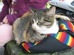 3-很可愛的一隻母貓