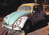 Our bug before restoration
