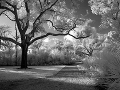 A Walk in the Park (Kimberly Dickinson) Tags: park trees sky blackandwhite bw lake water beauty wales clouds digital reflections garden landscape scenery florida path infrared bok sanctuary digitalinfrared mywinners theunforgettablepictures artlegacy artinbw thegoldenmermaid bachspicsgallery thegalleryoffinephotography modifiednikoncoolpix8400