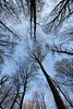 Trees meeting in the forest - IMG_2892 (Andreas Helke) Tags: test topv111 forest canon germany deutschland europa europe soft topv1111 sharp example fav dslr popular canoneos350d baum twa 1022 toprint 10mm canonefs1022mmf3545usm canon1022 fav10 v1000 candreashelke kleinschneen worldsfavorite 200612273nogroups 20061228151 20070101433 20070105514 donothide 20070129774 20070131794 20070201965 pi30 200702192166 oldstileoriginalsecret canondslrlenscomparison 200711286806 pi25 200804128377 200804208428 200805118569 fav5andmore fav2andmore 20090206101210 popularold mymoreinterestingphotos